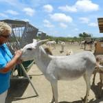 Marina Melis in Donkey Sanctuary - foto: Belkis Osepa