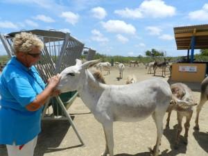 Marina Melis met haar ezel Foto: Belkis Osepa
