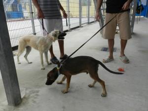 Luna en Luca met de twee gedetineerden Foto Belkis Osepa