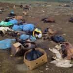 Onafgedekt afval op Landfill Malpais - foto: Kokomo Beach