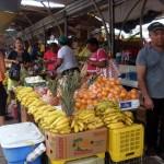 Venezolaanse barkjes - foto:  José Manuel Dias