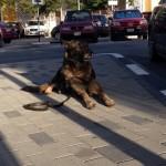 Ook voor de hond van de beveiliging van het gerecht was het een rustige ochtend - foto: Anneke Polak