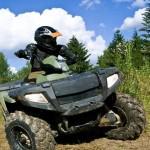 Een bestuurder van een quad zou in bezit moeten zijn van rijbewijs B en een goede helm