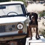 Samen met Platform Dierenwelzijn Curaçao gaat het OM onder andere via sociale media helpen met het opsporen van dierenmishandeling.