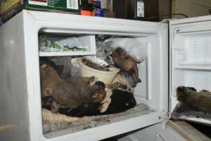 Overal in en om het huis waren dode honden, zelfs in de vriezer - foto: politie